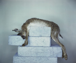 Richard Learoy, Breeze Blocks with Hare, 2007
